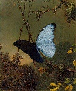 Dialogue Intérieur dans Travail sur soi ! 501px-Martin_Johnson_Heade_-Blue_Morpho_Butterfly_ATC-250x300