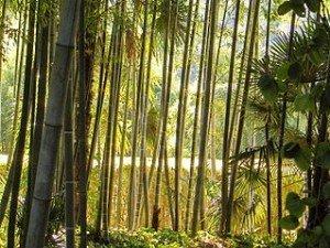 Faire sauter les croyances dans Zones erronées bambouseraie_-300x225