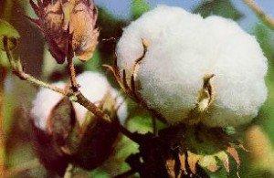 La perversion de l'Esprit dans Méditation coton-duvets-300x195