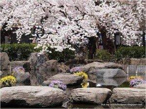 S'aligner à la source dans Méditation printemps-japon-l-14-300x225