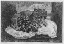 Rêves : des images à messages dans Rêves chat-et-chatons