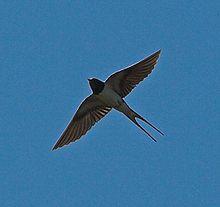 Etape 2012 dans ADN Démystifiée oiseau1