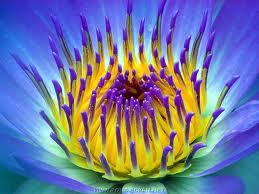 La méditation est dans le présent  dans Méditation 2a