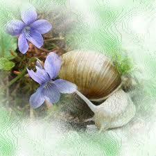 La beauté est une manifestation de Dieu dans DIEU escargot