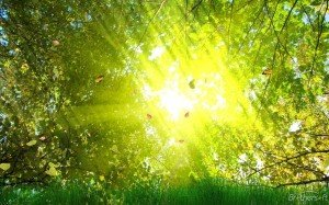 La guérison nous vient de nos mémoires archaïques dans Guérir en douceur soleil-300x187