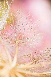 Ho'oponopono… Adressé à toutes les femmes dans L'Esprit  Guérisseur perle-pluie