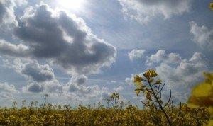 ob_c97b05_2014-04-21colza-fleuri-yvelines