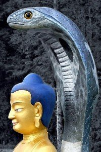 Bouddha serpent