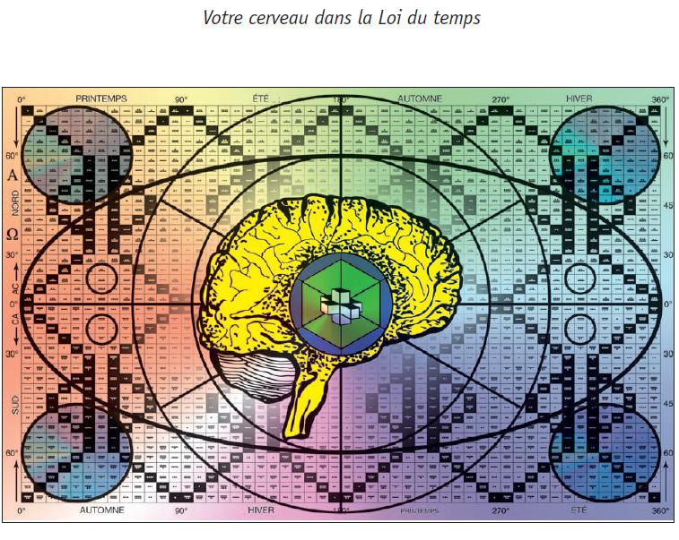 cerveau dans la loi du temps