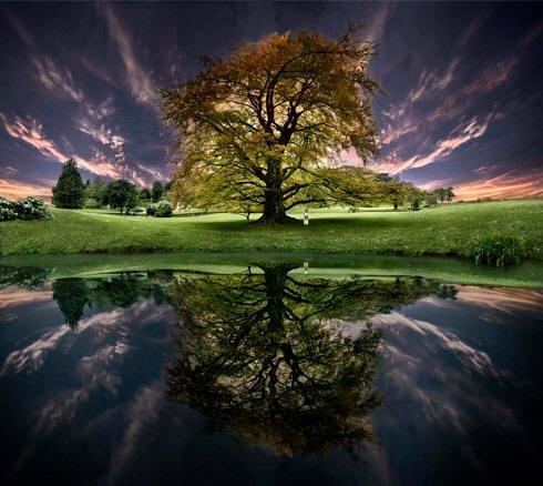 arbre MEDITATION